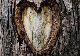 деревянная свадьба - 5 лет вместе