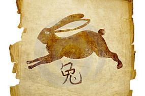 кролик год